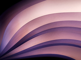 A Fan of Purple Photographic Print by Ursula Abresch