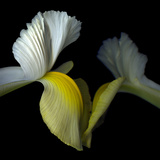 Iris Reach Out Touch Photographic Print by Magda Indigo