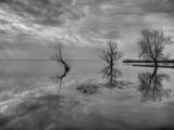 Lake Trees Photographic Print by Nejdet Duzen
