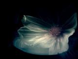 Interior Sweetness Photographic Print by Philippe Sainte-Laudy