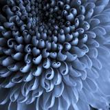 The Big Blue Stampa fotografica di Doug Chinnery