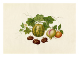 Citrus reticulata, Prunis persica, Citrullus lanatus, Eleocharis tuberosa Giclee Print by  Wang Lui Chi
