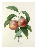 Pêcher à fruits lisses Giclee Print by  Victor