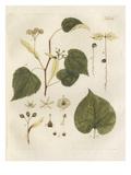 Winterlinde Giclee Print by Johann Simon Kerner