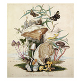 Plate VI Giclee Print by Thomas the Elder Robins