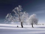 Dobbel vinter Fotografisk trykk av Philippe Sainte-Laudy