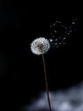 Just a Wind Blow Stampa fotografica di Marco Carmassi