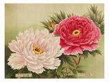 No. 37 Kasumi-No-Mori and No.38 Kiku-Botan Giclee Print
