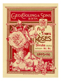 Fruit Trees, Rose and Shrubs Giclee Print by George Cooling & Sons