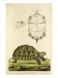 Tab XXVI Giclee Print by John Frederick Miller
