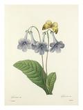 Gloxinie Var.: Gloxinis Var Giclee Print by  Langlois