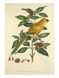 Tab V Giclee Print by John Frederick Miller