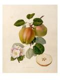The Dutch Codlin Reproduction procédé giclée par William Hooker