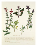 Plate 1 Giclee Print by Pierre Francois Ledoulx