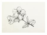 Rhododendron moupinense Giclee Print by Graham Stuart Thomas