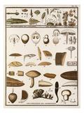 Plate VI Giclee Print by Jean Baptiste François Bulliard