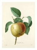 Calville blanc Giclee Print by Joseph Marie Bessin