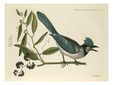T. 15 Giclee Print by Mark Catesby