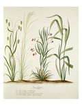 Plate 6 Giclee Print by Pierre Francois Ledoulx