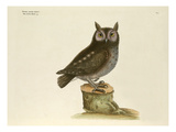 T. 7 Giclee Print by Mark Catesby