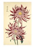 Seirioden Giclee Print by Keikwa Hasegawa