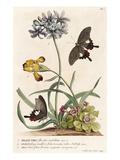 1. Polyanthes, 2. Oxalis, 3. Iris Giclee Print by Georg Dionysius Ehret