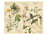 Wild flowers composite Impression giclée par Lilian Snelling