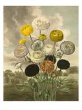 Plate III Giclee Print by Samuel Curtis