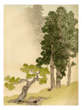 Japanese conifers and trees Giclee Print by L. Boehmer & Co