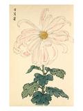 Jitsu Getsu shi Giclee Print by Keikwa Hasegawa