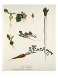 Plate 22 Giclee Print by Jean Charles Verbrugge