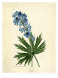 Delphinium Giclee Print by John Curtis