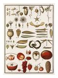 Plate V Giclee Print by Jean Baptiste François Bulliard