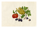 Citrus medica sarcodactylis, Citrus reticulata, Carissa caraunda Giclee Print by  Wang Lui Chi