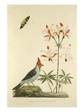 Tab II Giclee Print by John Frederick Miller