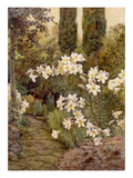 Consider the Lilies Giclee Print by Edith Helena Adie