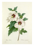 Althea Frutex: Hibiscus Syriacus Giclee Print by Joseph Marie Bessin