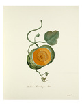 Plate 13 Giclee Print by Pierre Francois Ledoulx