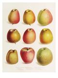 Plate XXIII Giclee Print by Elizabeth Ronalds