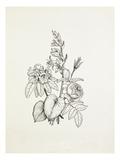 Hosta, Rhododendron, Rose Reproduction procédé giclée par Graham Stuart Thomas