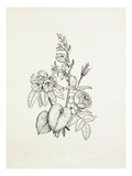 Hosta, Rhododendron, Rose Giclee Print by Graham Stuart Thomas