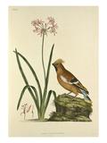 Tab VIII Giclee Print by John Frederick Miller