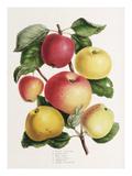 Plate VI Giclee Print by Elizabeth Ronalds