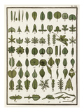 Plate VIII Giclee Print by Jean Baptiste François Bulliard