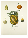 Plate 12 Giclee Print by Pierre Francois Ledoulx