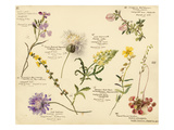 Wild flowers composite Giclee Print by Lilian Snelling