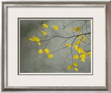 Yellow Autumnal Birch (Betula) Tree Limbs Against Gray Stucco Wall Framed Photographic Print by Daniel Root
