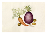 Brassica rapa, Daucus carota, Solanum lycopersicum Giclee Print by  Wang Lui Chi