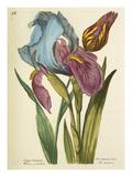 Plate 58 Giclee Print by Nicolas Robert