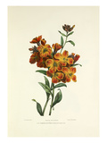 Wall Flower Giclee Print by Charles Joseph Hullmandel